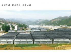 雪榕集团贵州冷底食用菌基地